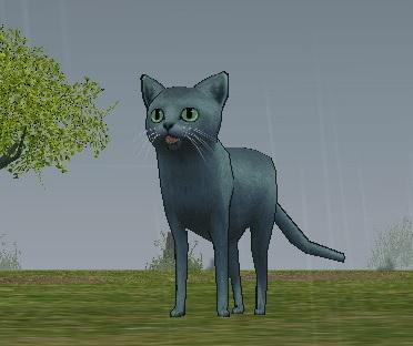 センマイ平原に出現した猫