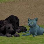 クマと猫とラブちゃん。